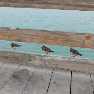 3 little birds by sailorgirl jewelry